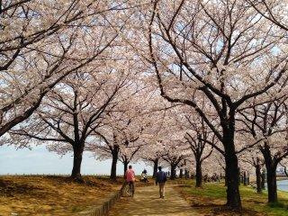 Passear sob estas árvores dá uma incrível sensação de paz e calma
