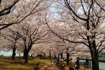 <p>赏樱是日本人最喜爱的活动之一。</p>