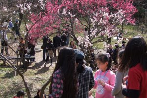 The Okura-yama plum garden is a popular spot for picnic-goers, especially (of course!) during the plum blossom season. Here you will find people sitting on the ground enjoying the flowers, food and chatting.