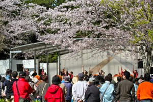 Cherry Blossom Festival performers at Mobara Park from April 1st to 15th