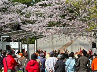 การแสดงของเทศกาลชมดอกซากุระที่สวนโมบาระจากวันที่ 1 เมษายนจนถึงวันที่ 15 เมษายน