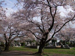 ต้นไม้ที่สง่างาม