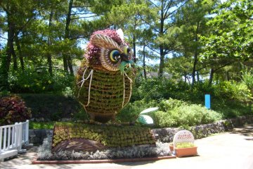 <p>Hi there! You want fish, I`ll show you a fish! A topiary owl welcomes you to Ocean Expo Park, home of Churaumi Aquarium.</p>