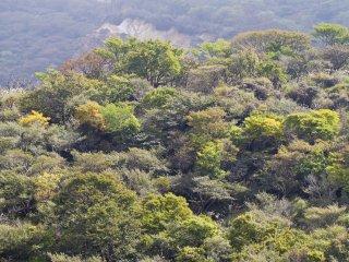 10月の秋の日、木々が色付き始めている