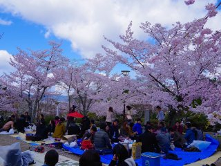 Flower-viewing parties under the cherry trees