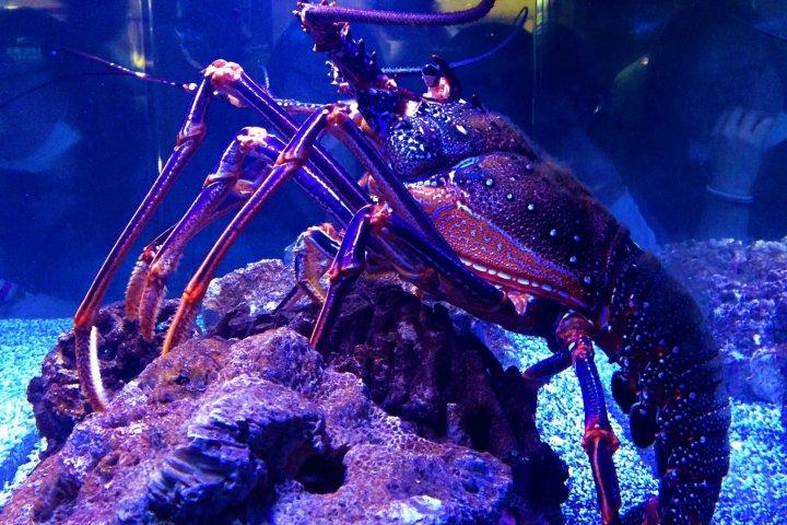 A Visit to the Sumida Aquarium