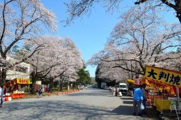 <p>At Kobayashi Sakura Matsuri</p>