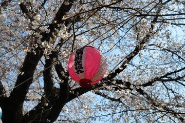 <p>At Kobayashi Park</p>