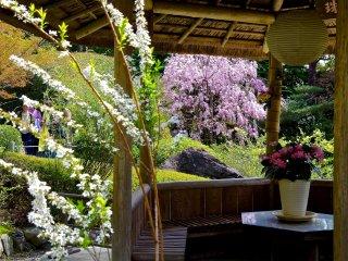 Une tonnelle dans le jardin Yoko-en