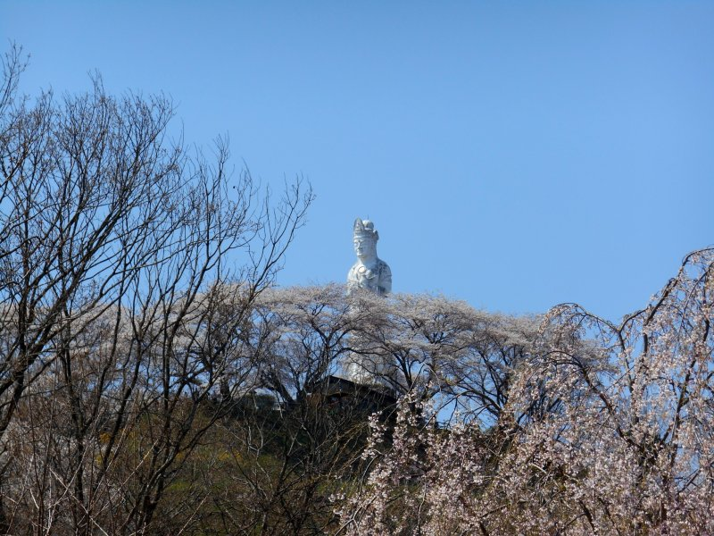 언덕 꼭대기에 있는 평화의 여신상, 그리고 꽃이 피는 벚나무