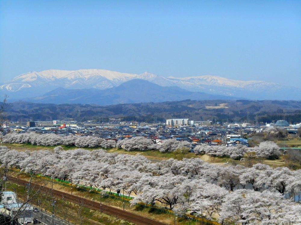 시바타 사쿠라 축제 기간 중 후나오카 성 공원의 전망대에서 바라본 자오산과 시로이시 강 주변의 벚나무 1000그루의 경치
