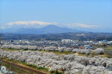 시바타 벚꽃축제 : 후나오카 성지 공원편