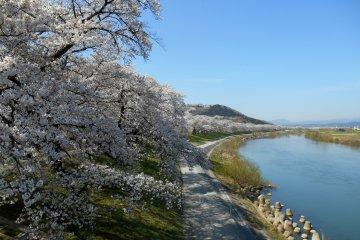 <p>An endless line of 1000 cherry trees and the beautiful Shiroishi River</p>