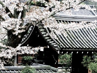 Side entrance to Tenryu-jiTemple