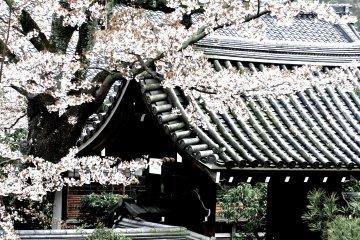 <p>Side entrance to Tenryu-ji&nbsp;Temple</p>