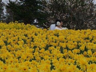 Tôi bắt gặp một cặp đôi đang chụp hình cưới. Mùa xuân đến báo hiệu cho một khởi đầu mới, tràn đầy sức sống