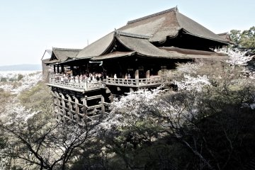 <p>What a great time to be at Kiyomizudera...the cherry trees were in full bloom</p>