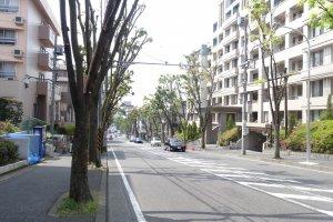ถนนต้นไม้ด้านหน้า Comfort Tama Plaza ในฤดูร้อนใบของต้นไม้คงจะงอกปกคลุมถนนไปตลอดสาย