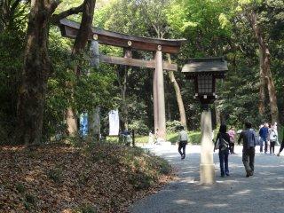 ประตูโทริประตูที่สองที่สร้างขึ้นจากไม้สนญี่ปุ่นอายุ 1500 ปี