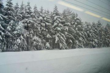 覆蓋一層白雪的大自然