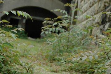 """Okunoshima """"Rabbit Island"""""""