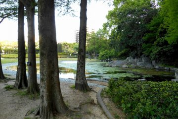 <p>Trees and serene Benten Pond. Throughout the year, students come here during art classes and draw pictures of nature</p>