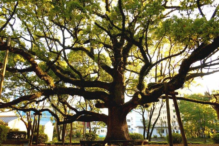 Tokushima Central Park