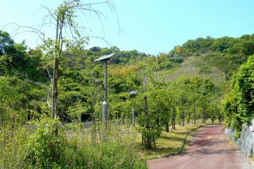 <p>Well-designed and maintained walking path surrounded by lush greenery</p>