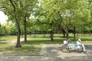 Les arbres et la verdure