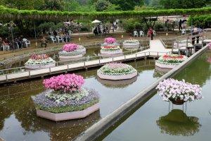 ภายในสวนมีดอกไม้อีกหลายสายพันธุ์