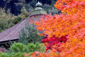 Temple roof and autumn leaves