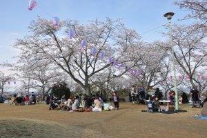 Taman Kinugasayama yang Indah