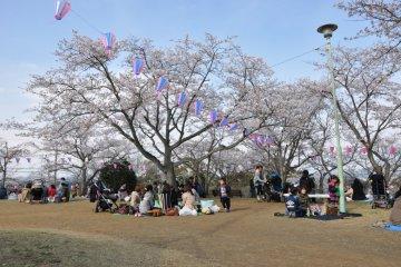 Beautiful Kinugasayama Koen