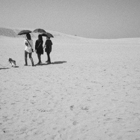 Scattered around Tottori Sand Dunes