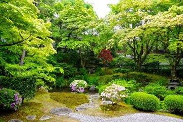 <p>Garden in May</p>