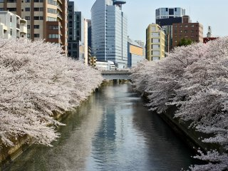 The trees in full bloom on both sides of the river, surrounding it in a colorful embrace.