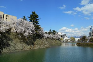青空の下、石垣に咲く桜の花と城のお濠