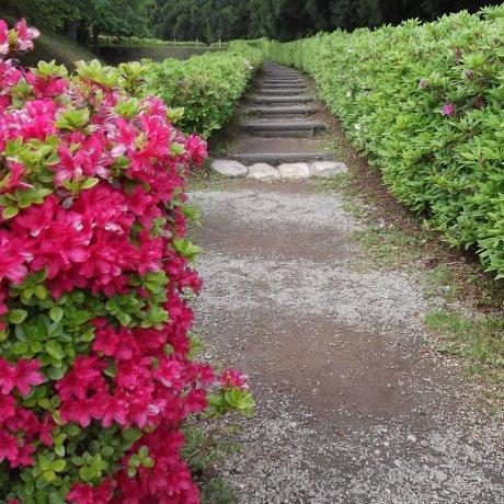 منتزه قلعة ياماناكا جو ، ميشيما