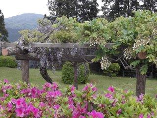 إطارات تدعم الأشجار الستارية التي تجذب النحل الصاخب