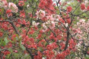 Multi-coloured blossoms