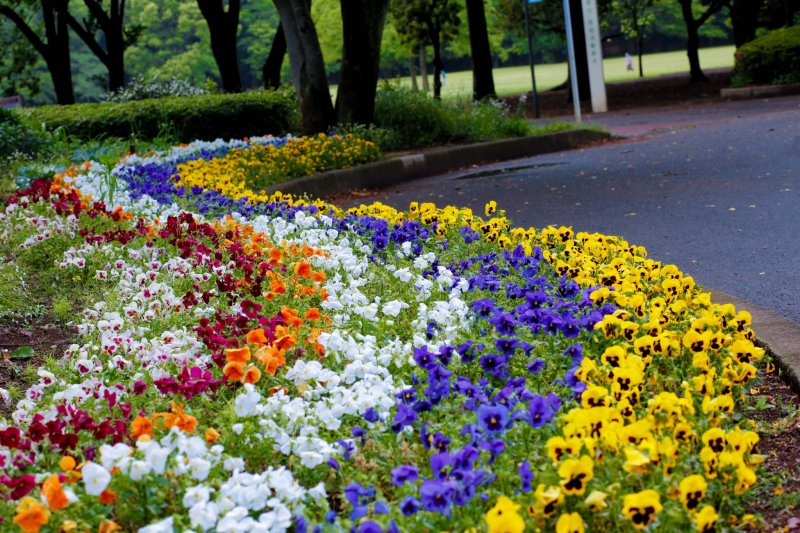 <p>A colorful treat to the eyes!</p>