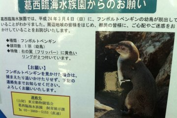 Escaped Penguin still at large in Tokyo Bay - a 'lost' poster