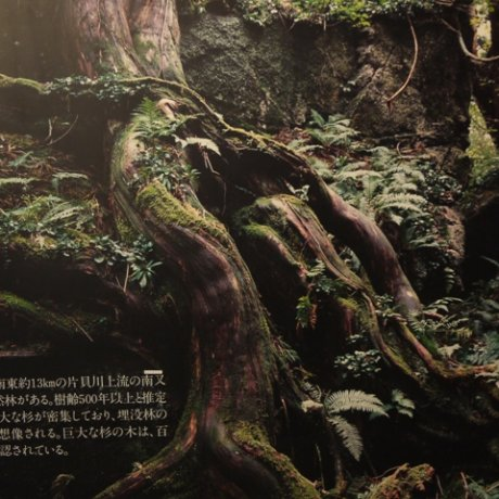 Uozu's Buried Forest Museum