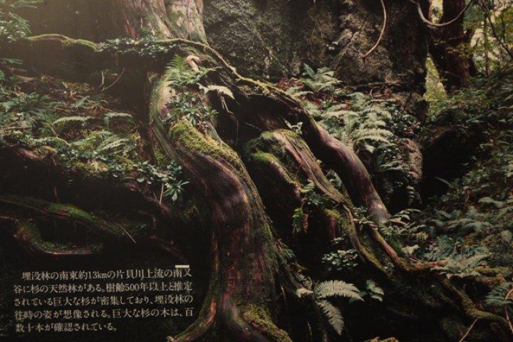 Uozu's Buried Forest Museum