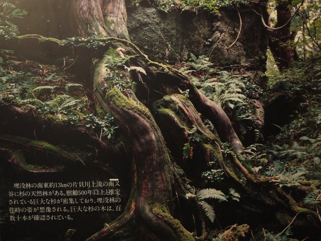 Poster of the Buried Forest