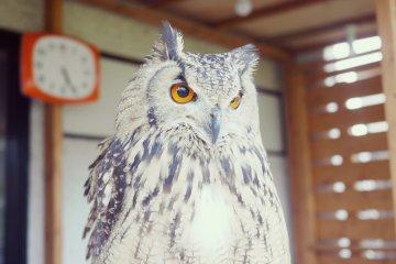 Fukuro Sabo Owl Cafe Kokubunji
