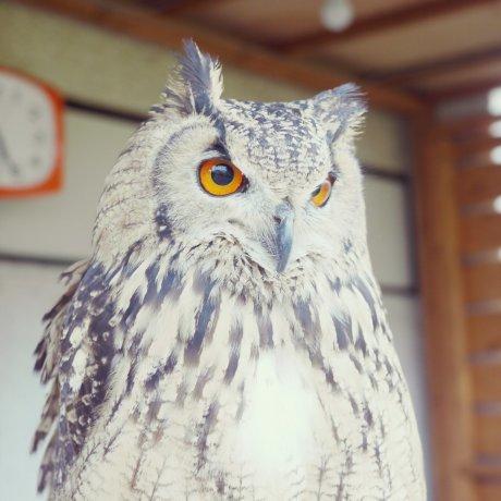 Kafe Burung Hantu Fukuro Sabo