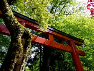 Red shrine gate and fresh greenery