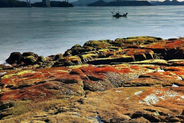 Oshima Island Ehime Japan Travel Japan Tourism Guide and
