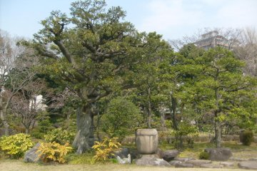<p>Gnarled old trees have plenty of character</p>